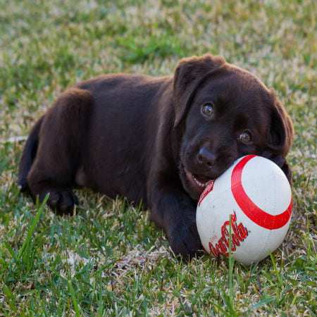 Dog-Friendly Barbecue Tips for Fourth of July