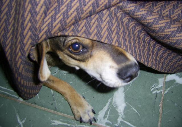 Hiding Dog