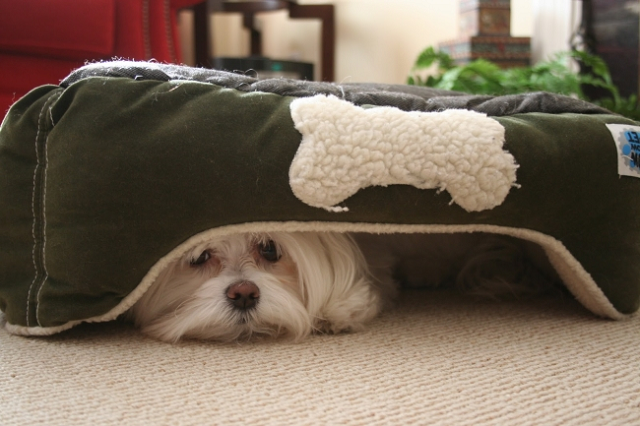 Dogs Hiding Under the Bed