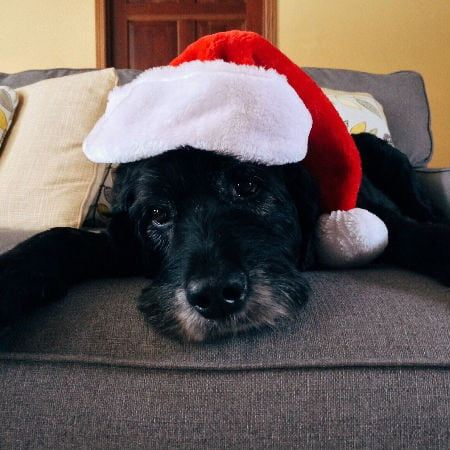 Black Dog with Christmas Hat