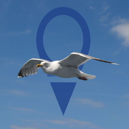 GPS-Outfitted Seagulls