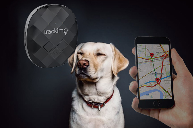 Dog Behavioral Tracking