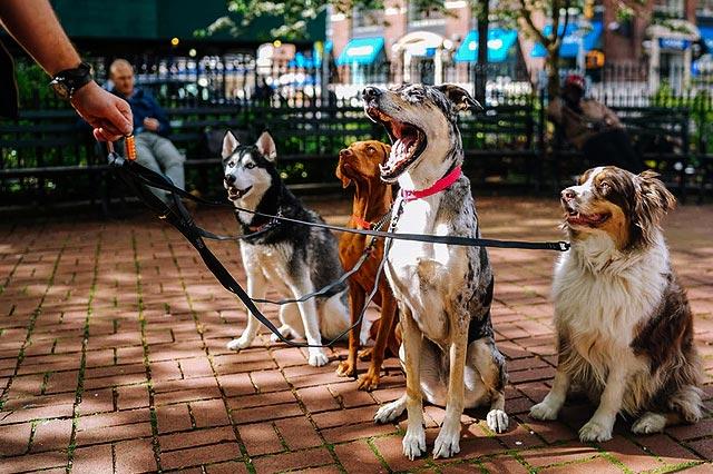 Dog Walking Business