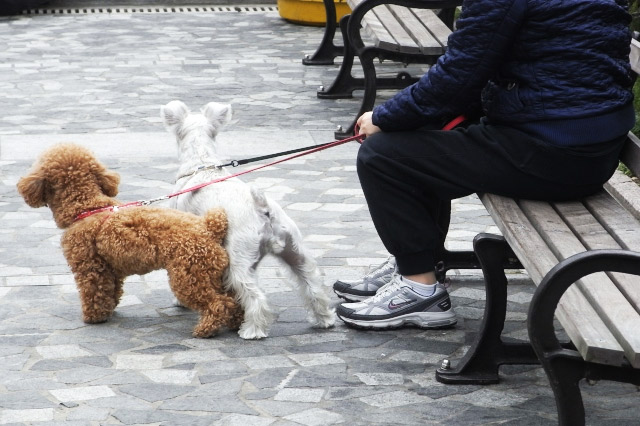 Dog Walks Ideas