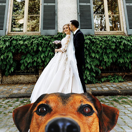 Keep Your Pet Safe During Your Wedding